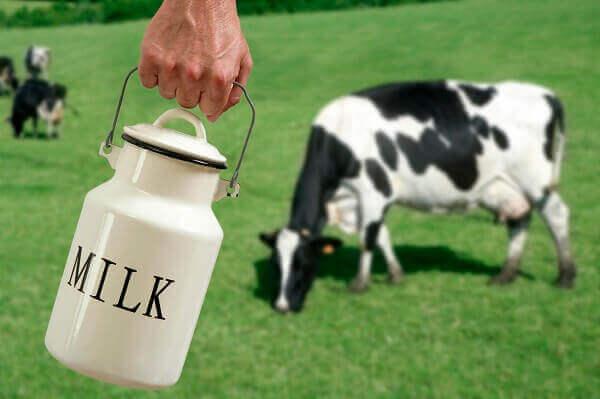 بررسی نقش چربی در جیره غذایی گاو شیری