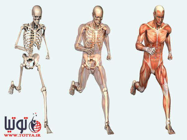 بخش های کالبد شناسی در بدن انسان