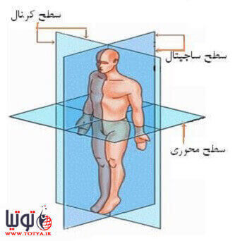 اصطلاحات جهت یابی بدن و آناتومیک