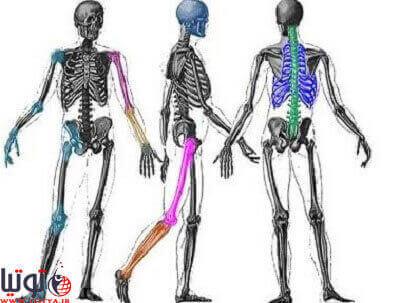 ساختار استخوانی بدن انسان