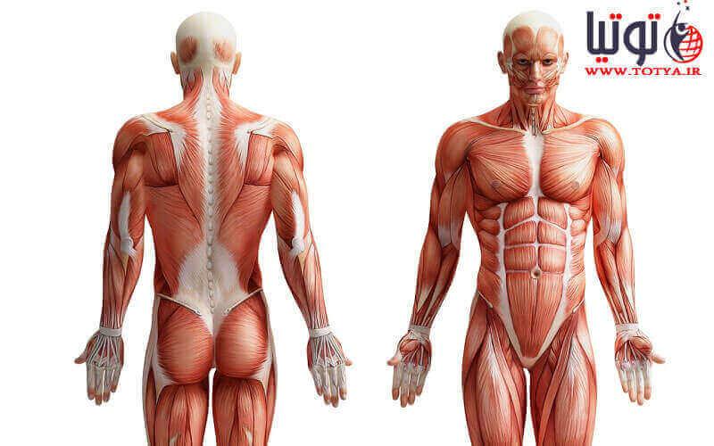 عملکرد دستگاها و ساختار بدن انسان