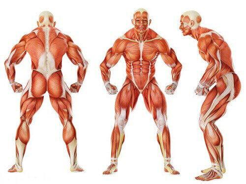 استراحت عضلانی (انبساط و شل بودن عضلانی)