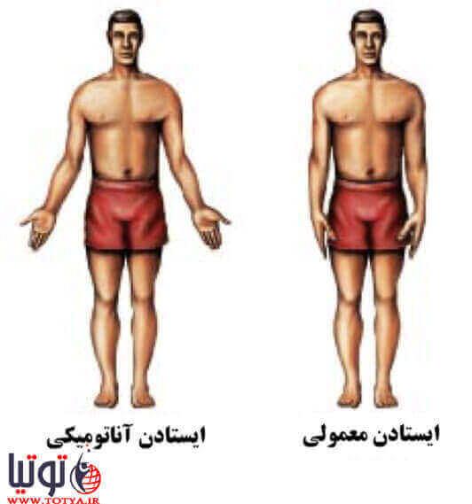 نوع ایستادن – آناتومیکی تشریحی و معمولی