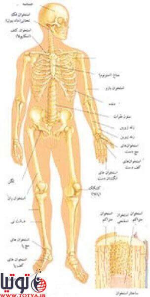 نشانه های پوکی استخوان