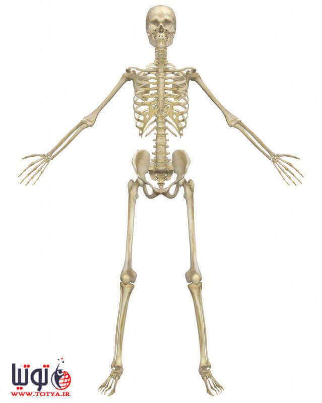 وظیفه استخوان های بدن