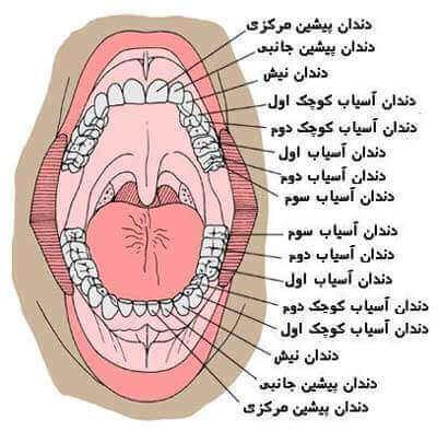 نکات اساسی در حفظ بهداشت دهان و دندان