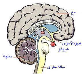 بهداشت دستگاه عصبی
