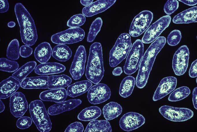شیوع بالای مقاومت دارویی در برابر TB