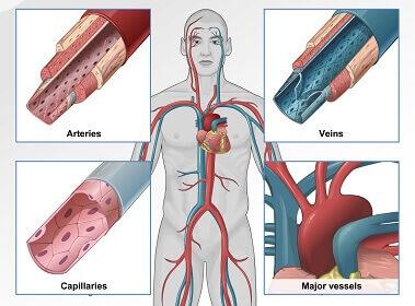 راه های تشخیص تنگی دریچه ریوی قلب
