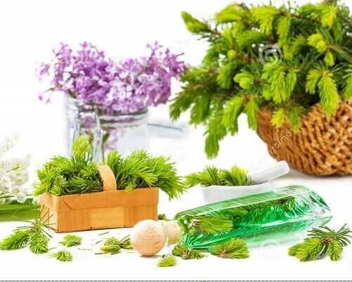 خواص گیاهان دارویی و عصاره آنها